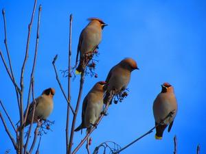 Весенний перелет птиц