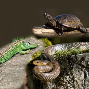Рептилии и пресмыкающиеся