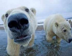 Сколько лет живет бурый медведь