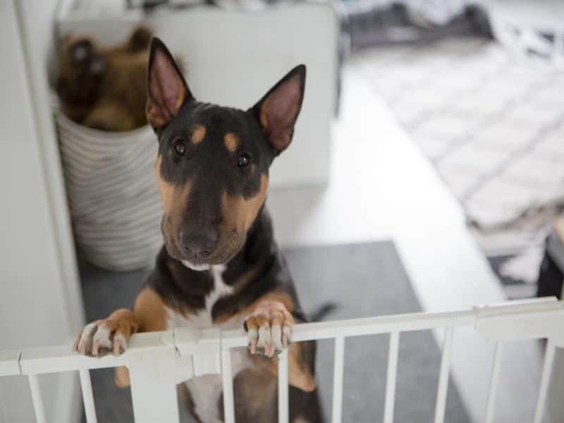 пес в вольере