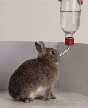 Вода в жизни кроликов