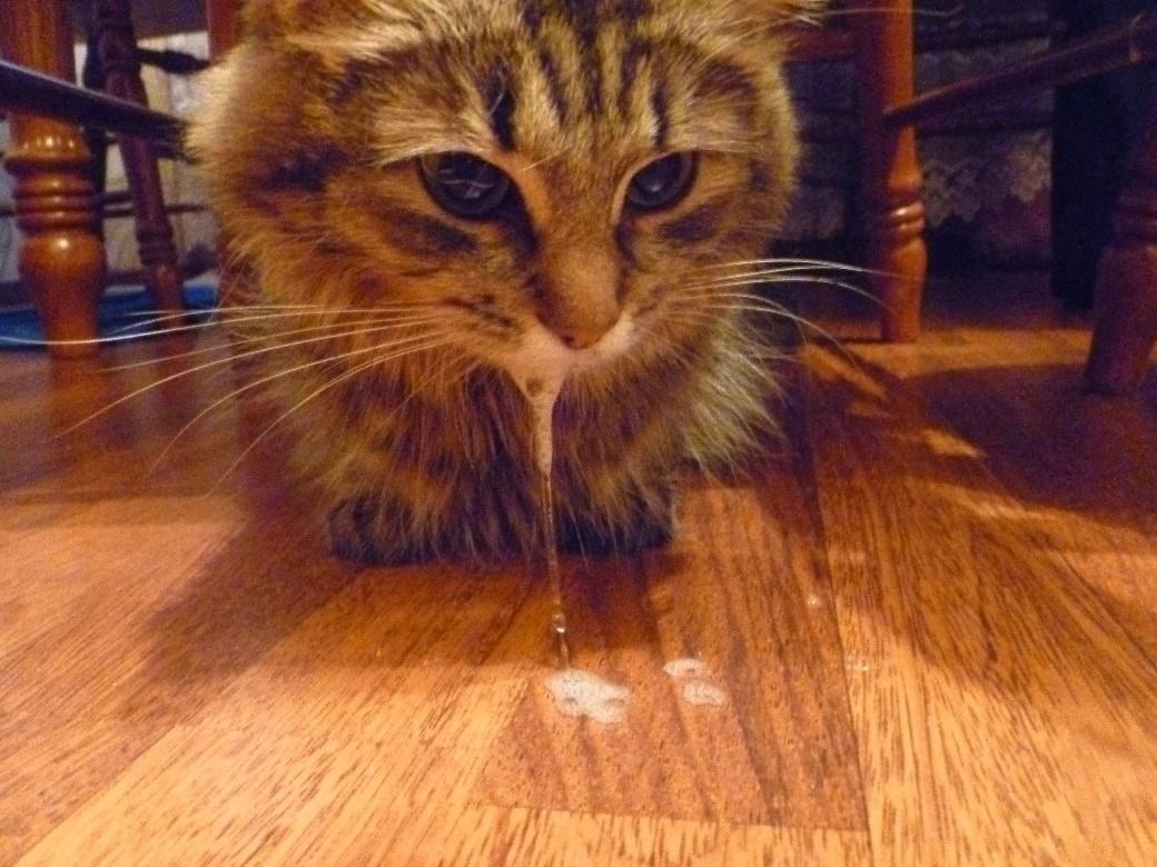 Почему у кошки сухой нос что делать
