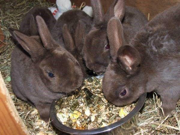 Комби-рационы производят для разных групп животных