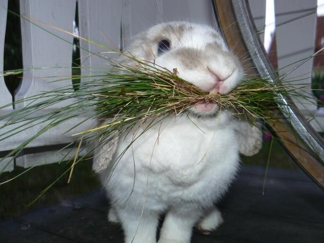 Свежая трава для кроликов - источник витаминов