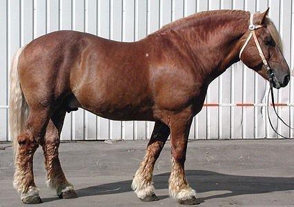 Советский тяжеловоз лошадь