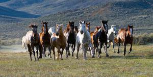 Жизненный цикл лошади