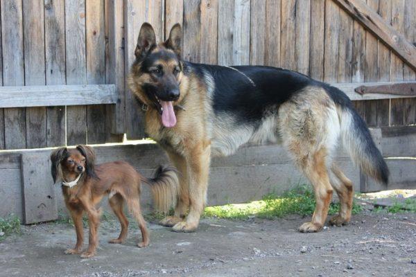 Активные прогулки – здоровая собака!