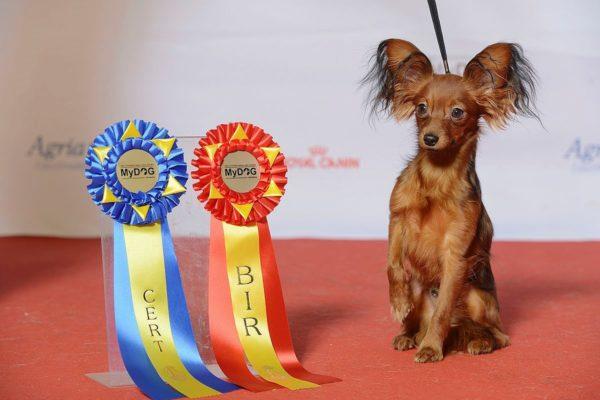 Покупать нужно собаку с родословной