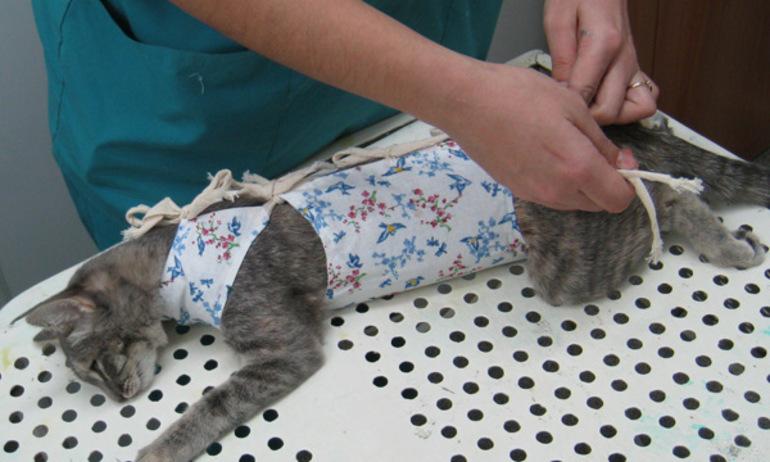 Одевание попоны на кошку