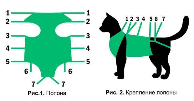 Макет как правильно одет попону на кошку