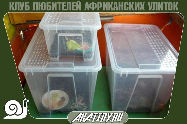Как оборудовать террариум или контейнер для улитки ахатин