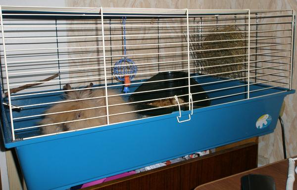 Клетка для карликового кролика