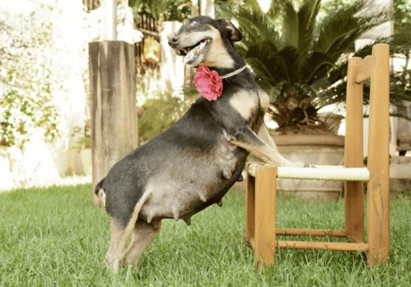 беременность собака
