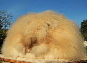 Как правильно ухаживать за пуховым кроликом
