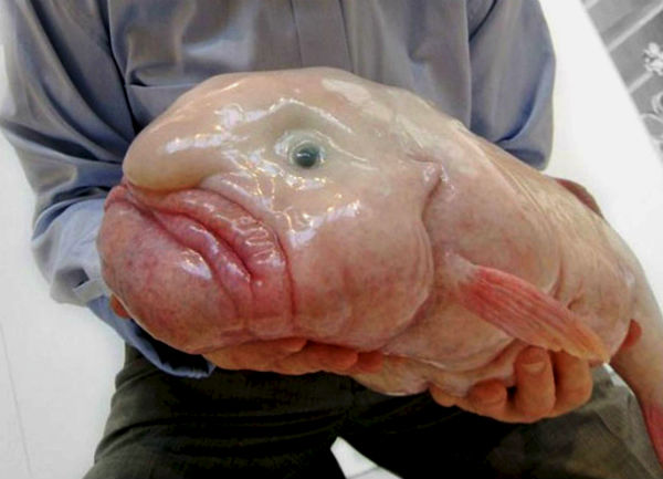 Капля рыба