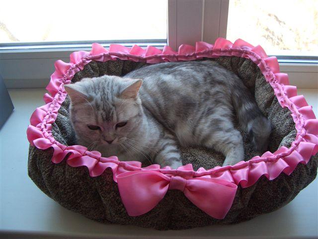 Лежанка для кошки, любящей спать на окне