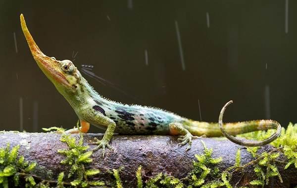 Виды-ящериц-Описание-особенности-среда-обитания-и-названия-видов-ящериц-22