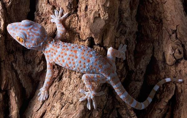 Виды-ящериц-Описание-особенности-среда-обитания-и-названия-видов-ящериц-28