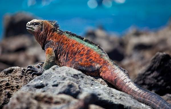 Виды-ящериц-Описание-особенности-среда-обитания-и-названия-видов-ящериц-34
