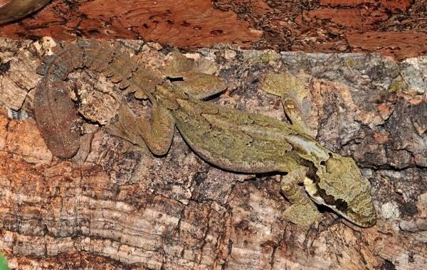Виды-ящериц-Описание-особенности-среда-обитания-и-названия-видов-ящериц-37