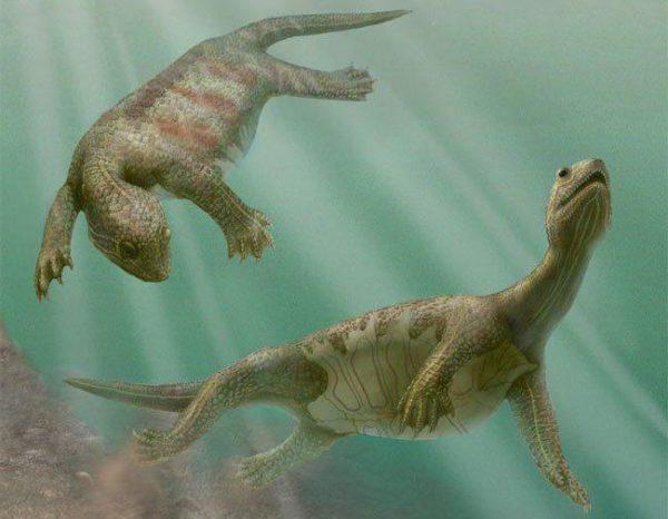Прародители черепах Odontochelys semitestacea