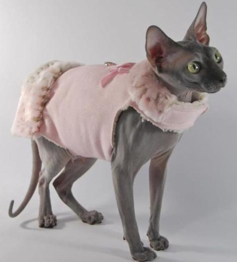 Одежда для кошек и кошки в одежде