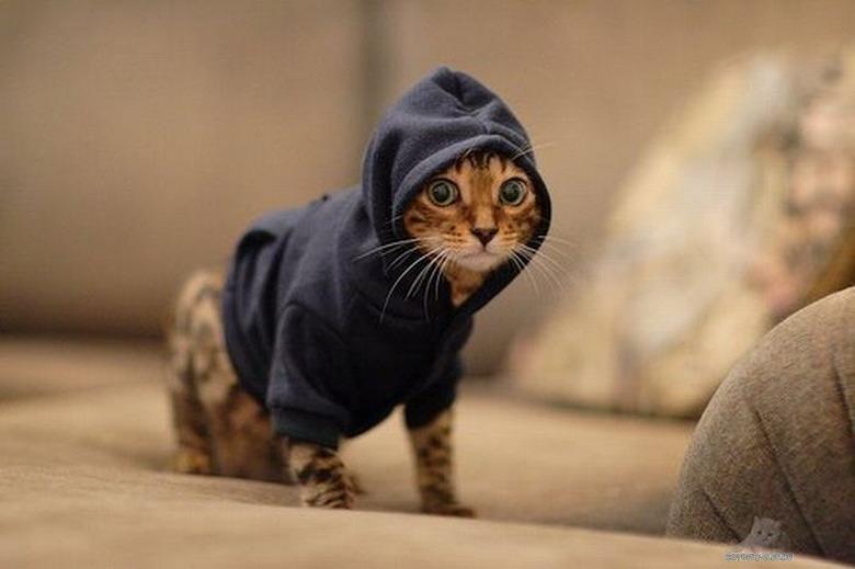 Шьём одежду для кошки