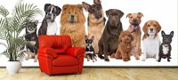 Лучшие породы собак для содержания в квартире: описание и особенности ухода