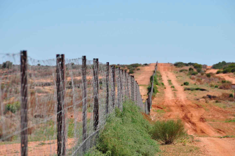 Собачий забор в Австралии
