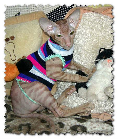 Выкройка одежды для кота